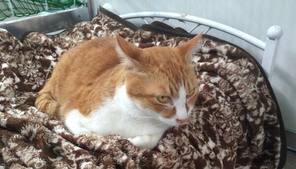 日本アニマルトラストに保護された猫