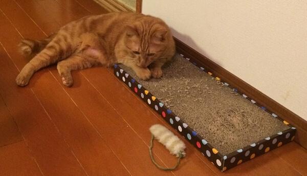 猫のためにならないことを習慣化させないためには