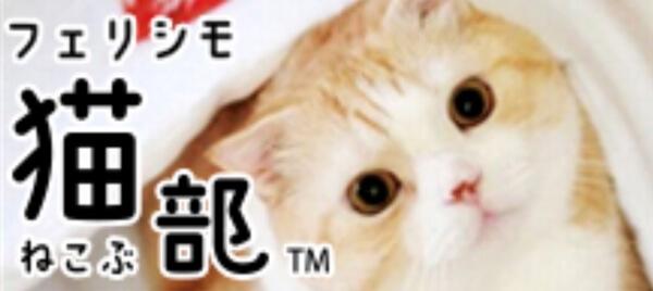 恵まれない猫や犬の支援活動を行うフェリシモわんにゃん支援活動