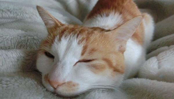 猫は患っている病気の症状によって鼻の状態が変化する