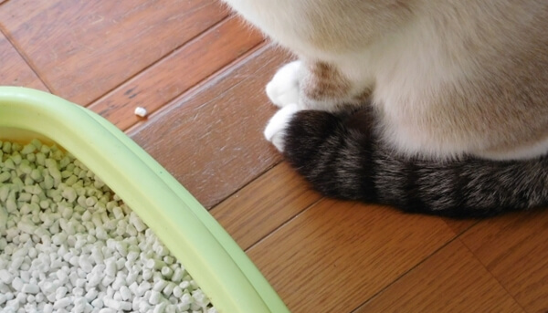 過去に泌尿器系の病歴がある猫やサポートフードを与えている猫には気を付けてあげよう