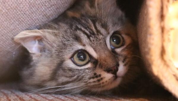 ヒゲを後ろに引いて警戒している猫