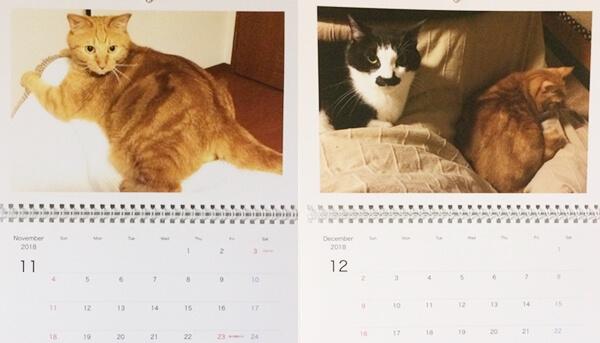 11月12月は我家の愛猫ハナとチョビがコタツ猫になる季節