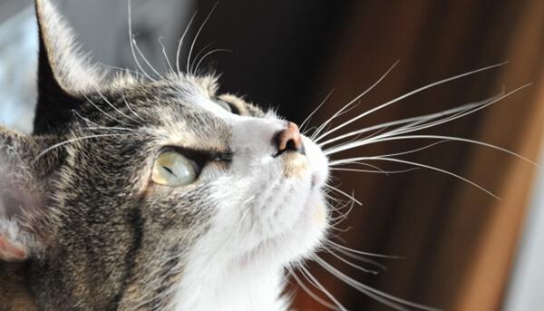 ヒゲを前に反らせてワクワクしている猫