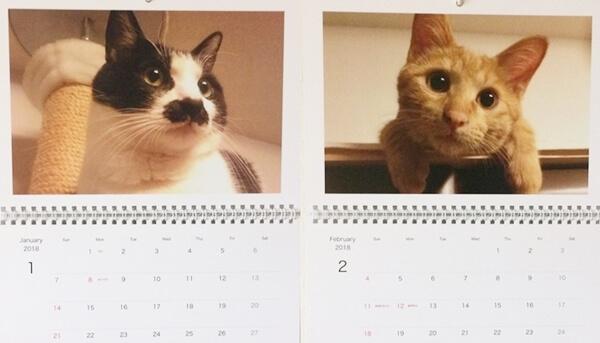 我家の愛猫ハナとチョビの2018年度カレンダー1月と2月