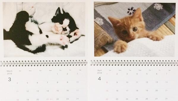 ハナとチョビが子猫のころの写真で2018年のカレンダーを作ってみました