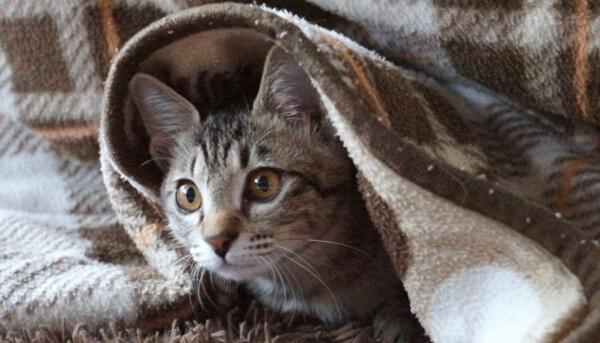 猫は暖かい所を好むので冬場はお気に入りの場所が変化する