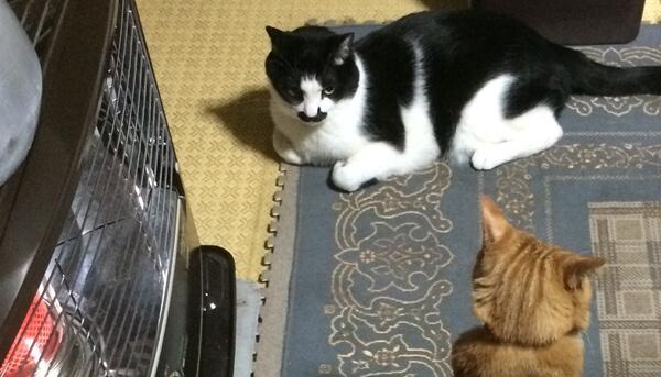 冬は猫の醍醐味が味わえる季節だが注意しないといけないことも増える