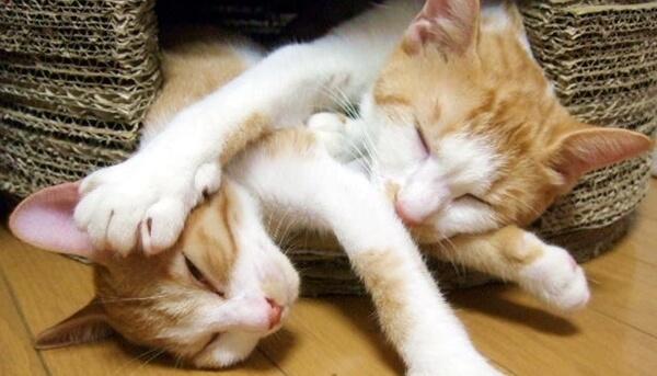 冬場の猫はエネルギーの消費を抑えるため寝ている時間が増える