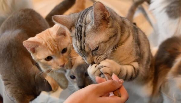 冬場の猫はエネルギーを蓄えるために食欲が増進する