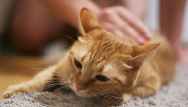 夏の猫の体調不良は毛艶を見ると分かる