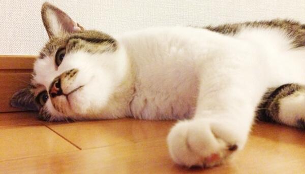 暑さ対策や室温を愛猫に選ばせてあげる