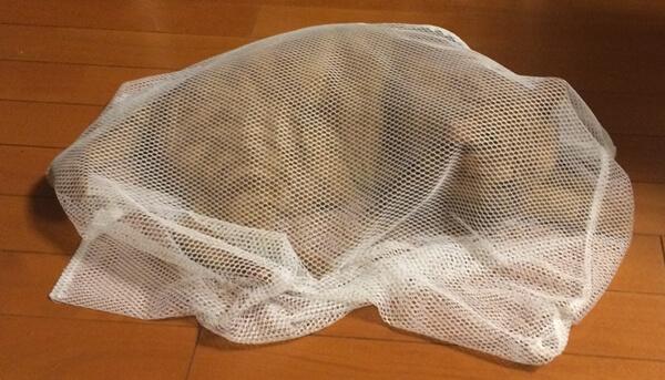 猫をキャリーに入れる方法をググったら、洗濯ネットに入れると簡単という記事を見つけた