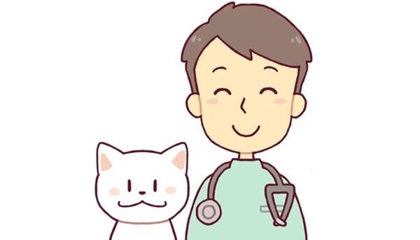 猫の知覚過敏症の治療には症状の把握が大切