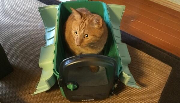 開けただけで入ってしまう、猫キャリー好きのチョビ