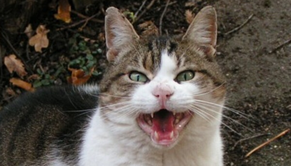 愛猫に猫の知覚過敏症の疑いがあるなら症状の記録が大切