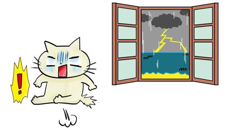 猫がパニックに陥りやすい原因と予防法