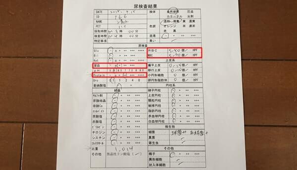 動物病院でもらったハナの尿検査結果表